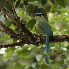 Chemin Inca Un paradis pour les ornithologues