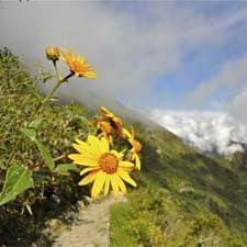 Mégadiversité sur le Chemin de l'Inca
